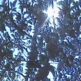 コンピュータースキャン by ぬかるんだ (Digital) 3