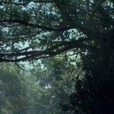 Rainforest Hill (I + II) by Lindsheaven Virtual Plaza (MiniDisc) 1
