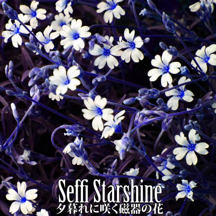 夕暮れに咲く磁器の花 by Seffi Starshine (Digital) 1